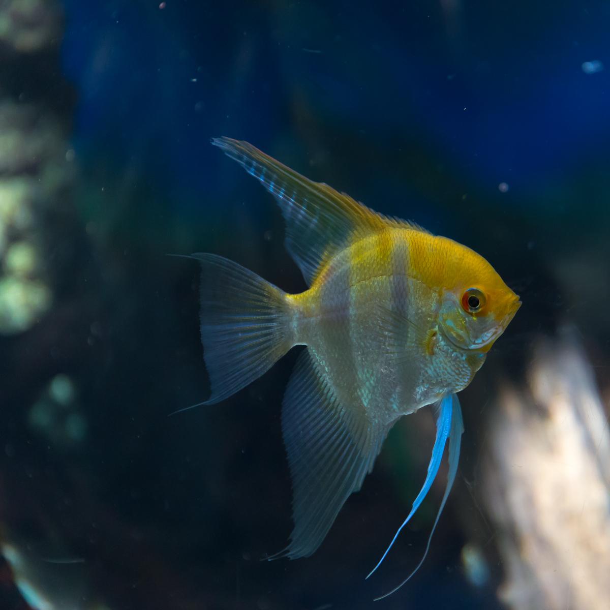 サンシャイン水族館貸切4(5)