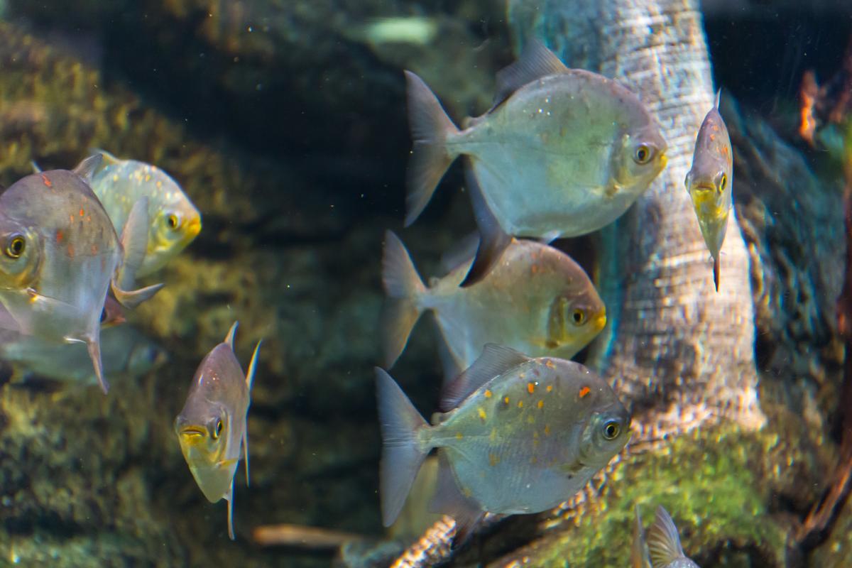 サンシャイン水族館貸切4(6)