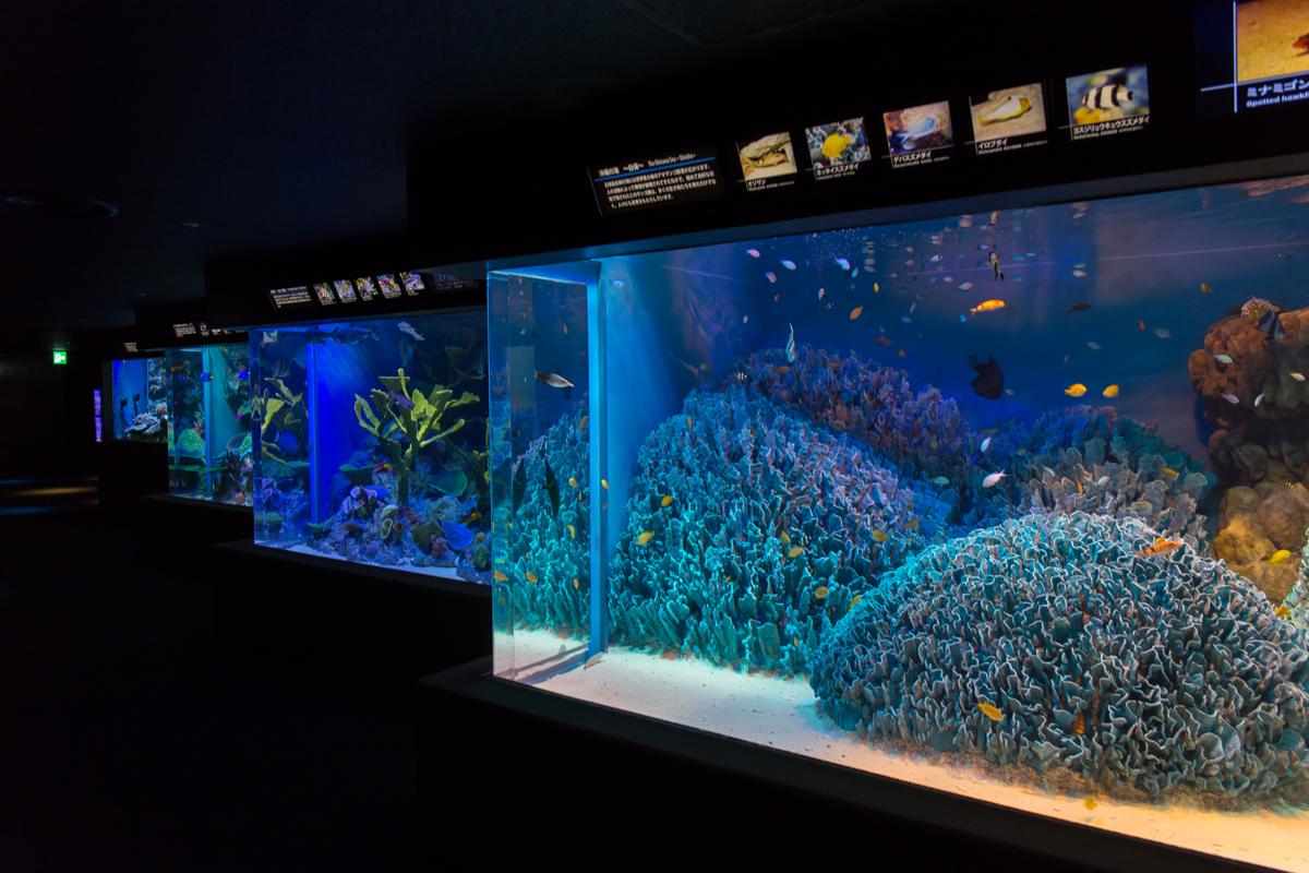 サンシャイン水族館貸切4(3)