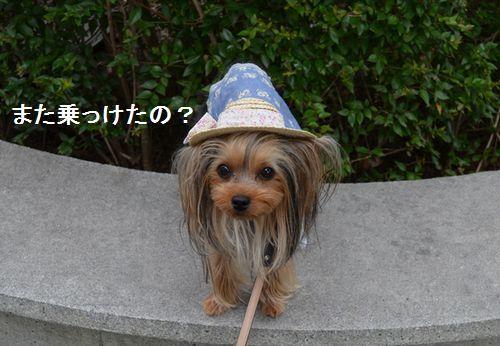 3_20150612072235db5.jpg