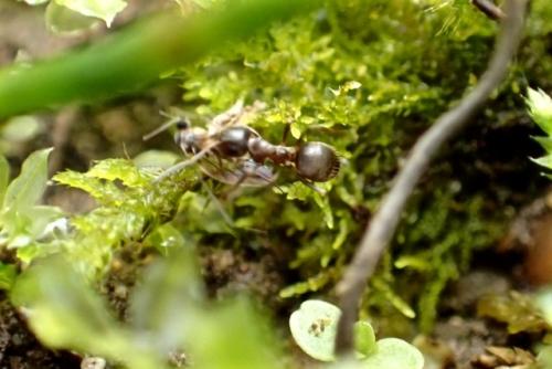 アリの狩り
