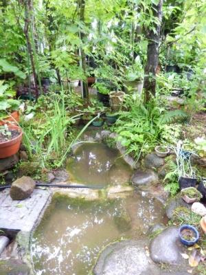 池掃除 水張り