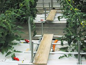 トマト管理5