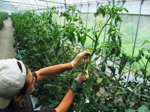 トマト管理2