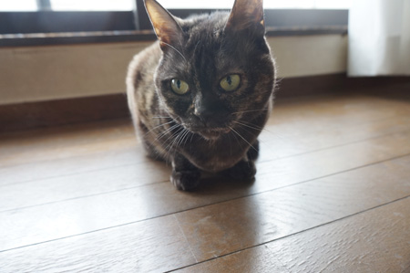 さび美ネコ?