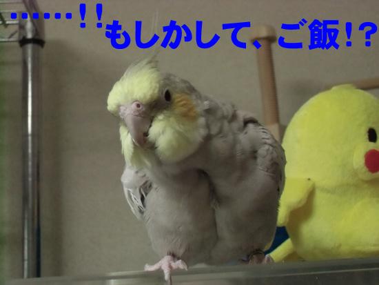 違うよ(^_^;)