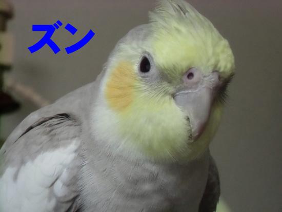 ズン!!!