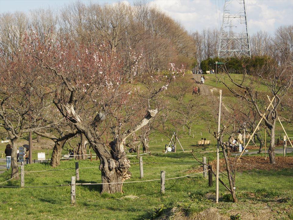 4月25日(土)の平岡公園の景観