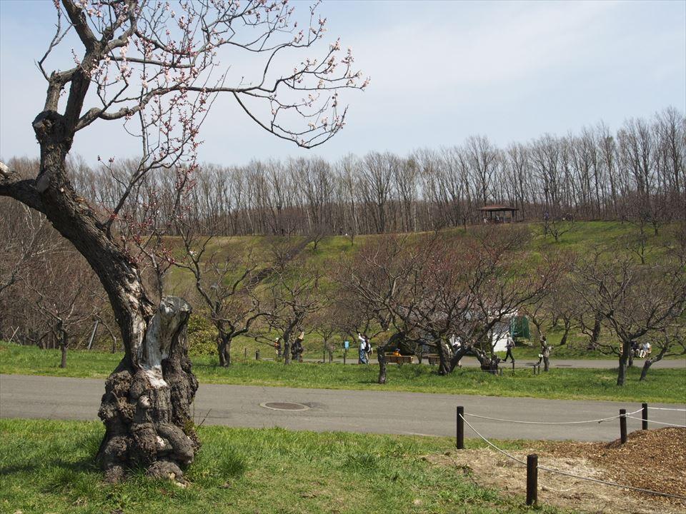 4月26日(日)の平岡公園の景観