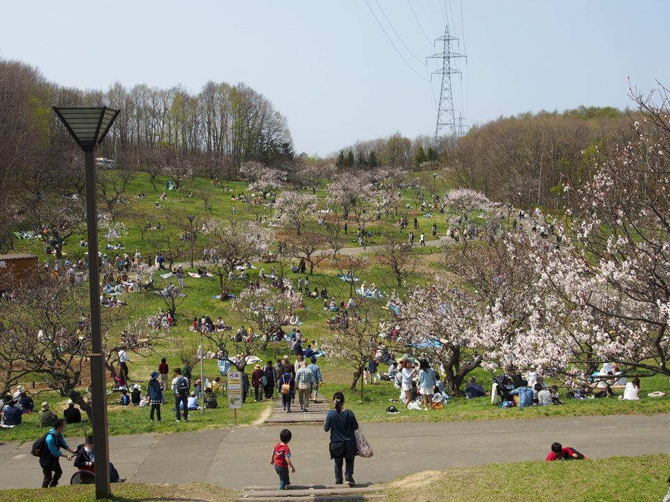 ひらおか梅まつり開催中の平岡公園