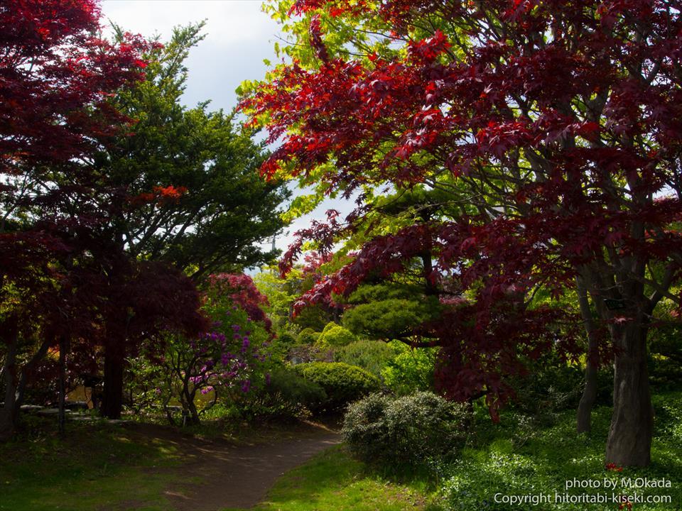 平岡樹芸センターの散策風景