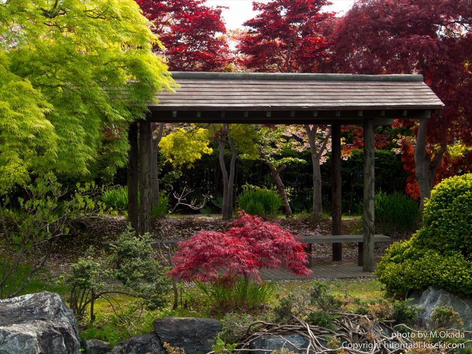 日本庭園らしき光景