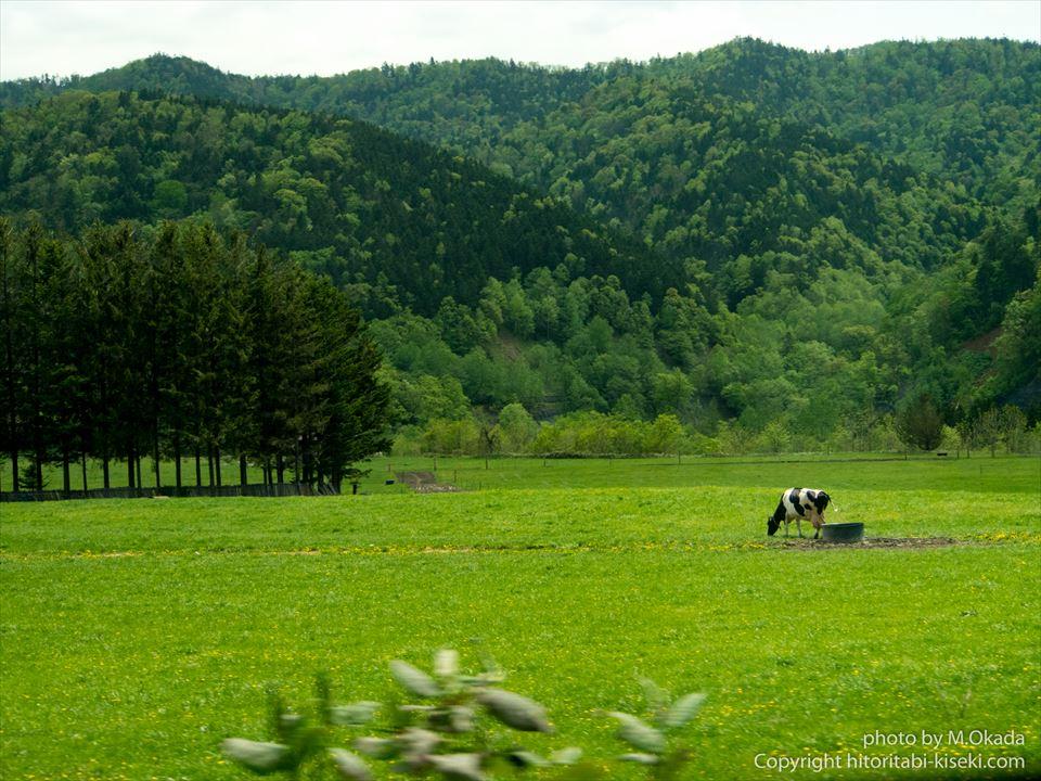 牛さんの見える北海道らしい風景