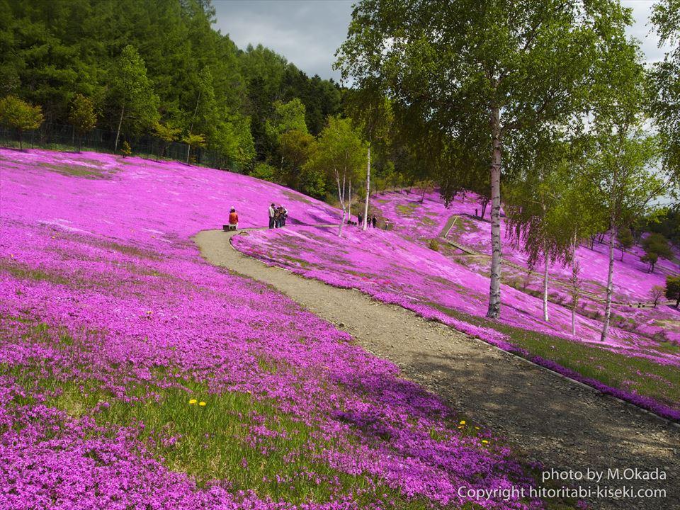 ピンク色に染まっている滝上公園