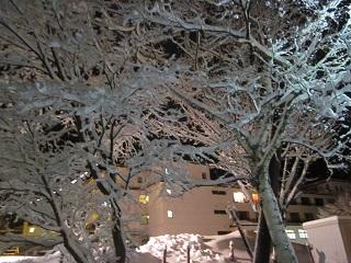 雪明かり 001