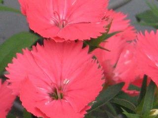 2008-12-09 2008-12-09 003 014.jpg
