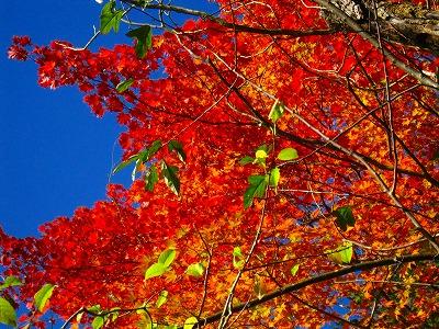 2009-10-11 2009-10-11 001 040.jpg