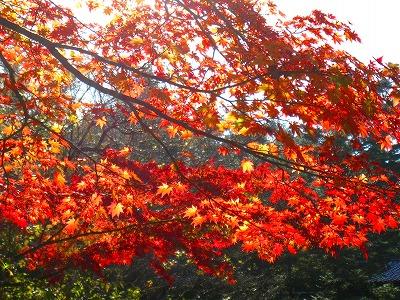 2009-10-11 2009-10-11 001 041.jpg