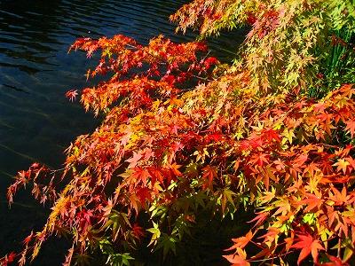 2009-10-11 2009-10-11 001 039.jpg
