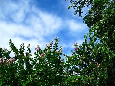2009-08-11 2009-08-11 002 026.jpg