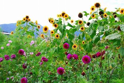 2009-08-15 2009-08-15 002 023.jpg