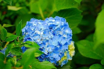 2009-05-30 2009-05-30 002 005.jpg