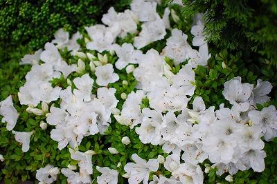 2009-05-30 2009-05-30 002 028.jpg