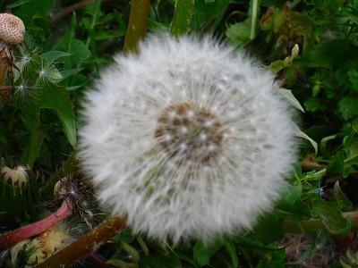 2009-05-04 2009-05-04 001 092.jpg
