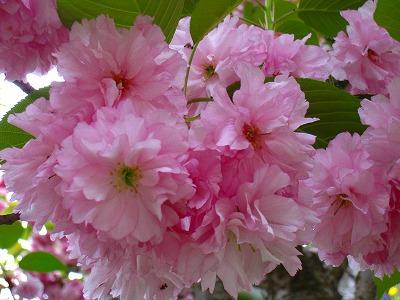 2009-05-04 2009-05-04 001 029.jpg