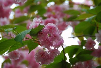 2009-05-05 2009-05-05 001 022.jpg