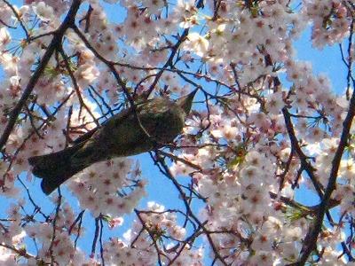 2009-04-04 2009-04-04 001 024.jpg