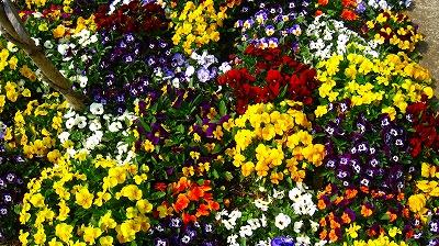 2009-04-07 2009-04-07 001 001.jpg