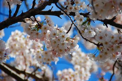 2009-04-04 2009-04-04 002 014.jpg