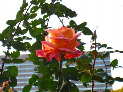 2010-12-05 2010-12-05 001 049.jpg
