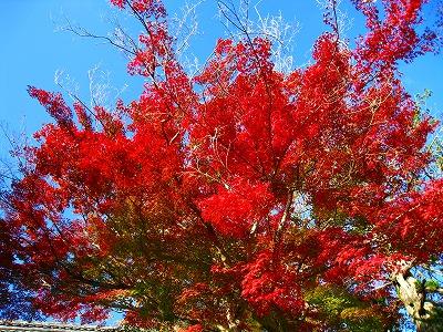 2010-11-20 2010-11-20 001 052.jpg