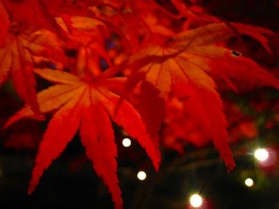 2010-11-20 2010-11-20 001 142.jpg
