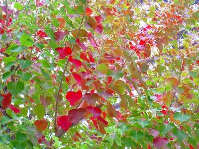 2010-10-30 2010-10-30 001 004.jpg
