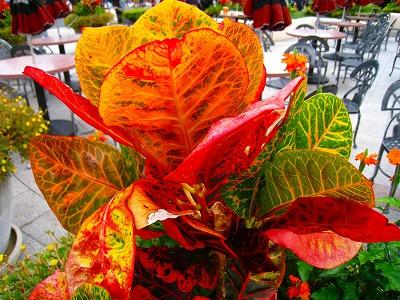 2010-10-29 2010-10-29 001 213.jpg