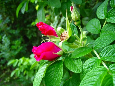 2010-08-29 2010-08-29 001 151.jpg