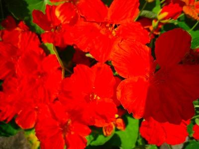 2010-08-07 2010-08-07 001 059.jpg