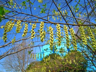 2010-04-03 2010-04-03 001 043.jpg