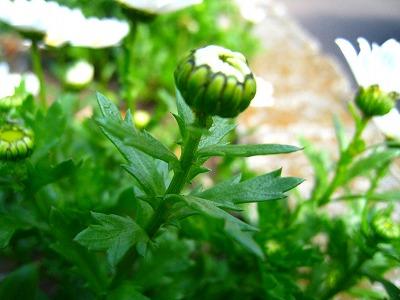 2010-04-03 2010-04-03 001 024.jpg