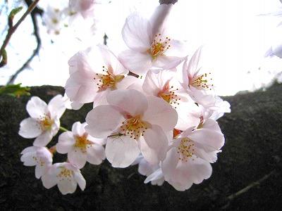 2010-04-03 2010-04-03 001 017.jpg