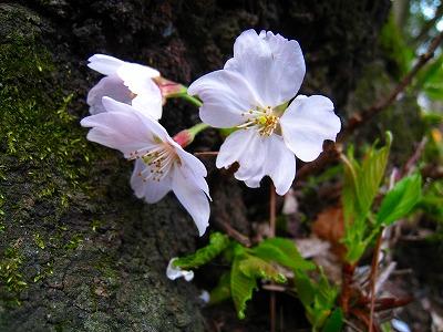 2010-04-03 2010-04-03 001 001.jpg