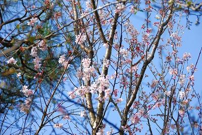 2010-03-22 2010-03-22 001 062.jpg