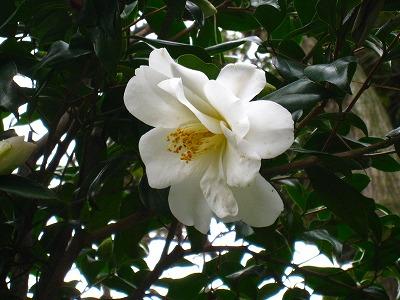 2010-03-04 2010-03-04 001 041.jpg