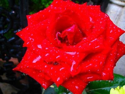 2009-09-01 2009-09-01 001 157.jpg