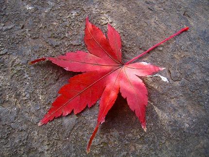 2011-12-25 2011-12-25 001 011.jpg