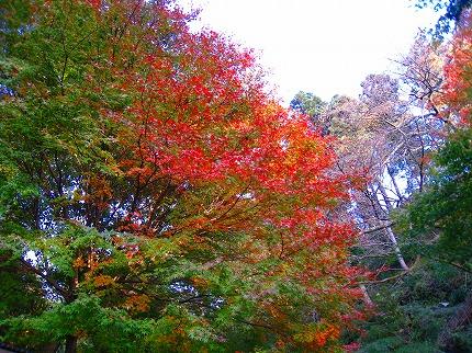 2011-11-26 2011-11-26 004 008.jpg