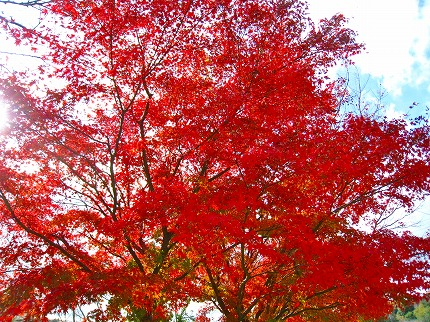 2011-11-26 2011-11-26 006 004.jpg